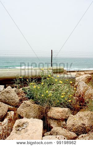 Flowers in Caesarea's ancient stones
