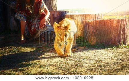 young woman with ornamental dress and gold jewel playing with lion cub in nature. eye contact
