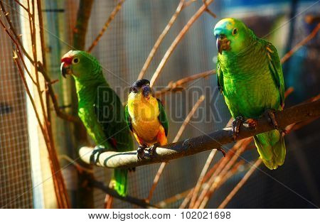 green and yellow colored parrots on branch.
