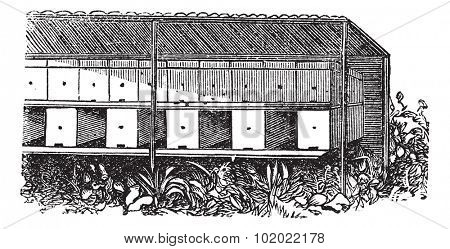 Apiary or Bee yard, vintage engraving. Old engraved illustration of covered Apiary. Trousset encyclopedia (1886 - 1891).