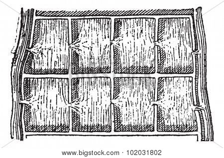 Rice field or Paddy field, vintage engraved illustration. Dictionary of words and things - Larive and Fleury - 1895.