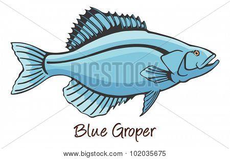 Grouper, Color Illustration