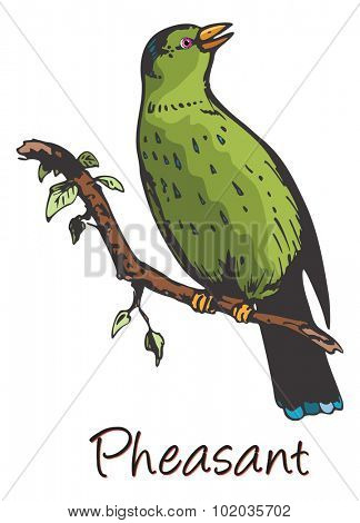 Pheasant, Perched on a Branch, Color Illustration