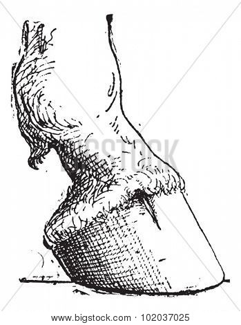 Horse Hoof, vintage engraved illustration. Dictionary of Words and Things - Larive and Fleury - 1895
