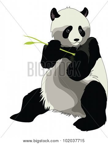 Giant Panda or Ailuropoda melanoleuca, Eating a Bamboo Shoot, vector illustration