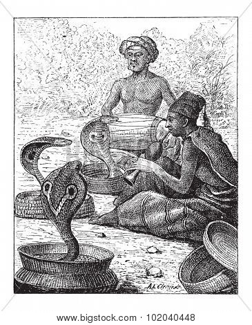 Cobra or Naja sp., showing Snake Charmers, vintage engraved illustration. Dictionary of Words and Things - Larive and Fleury - 1895