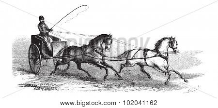 2-wheeled Cart drawn by 2 Horses in Tandem, vintage engraved illustration. Le Magasin Pittoresque - Larive and Fleury - 1874