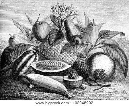 Group of fruit, vintage engraved illustration. Le Tour du Monde, Travel Journal, (1872).