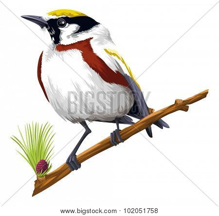 Vector illustration of bird perching on tree branch against white background.