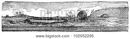 Coral Island, vintage engraved illustration. Natural History of Animals, 1880.