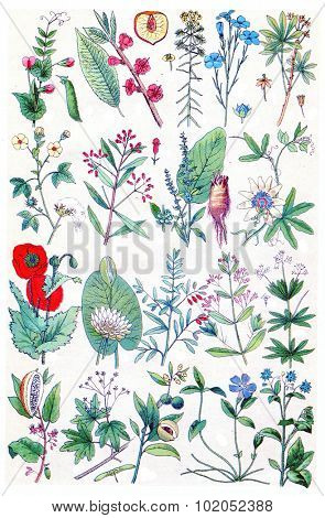 Herbs, flowers and plants collection, vintage engraved illustration. La Vie dans la nature, 1890.