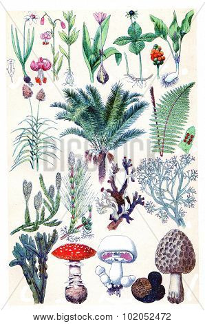 Nature herbs, plants and mushroom, vintage engraved illustration. La Vie dans la nature, 1890.