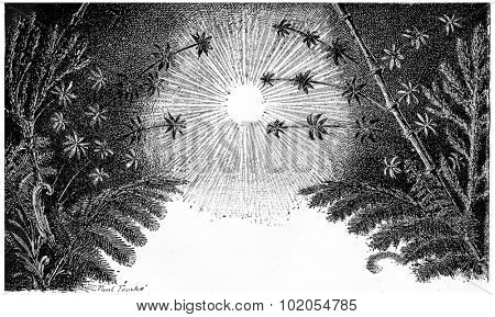 The Carboniferous period, vintage engraved illustration. Earth before man 1886.