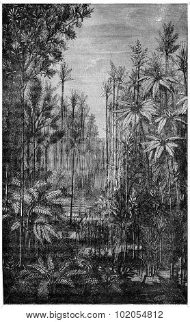 Forest Of The Carboniferous Era, vintage engraved illustration. Earth before man 1886.