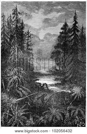 A forest in the early centuries of the Cretaceous Period, vintage engraved illustration. Earth before man  1886.