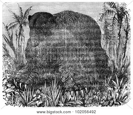 The Megatherium (Pliocene period of South America), vintage engraved illustration. Earth before man  1886.