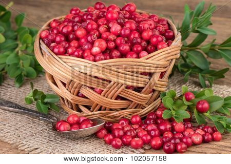 Lingonberry basket on burlap