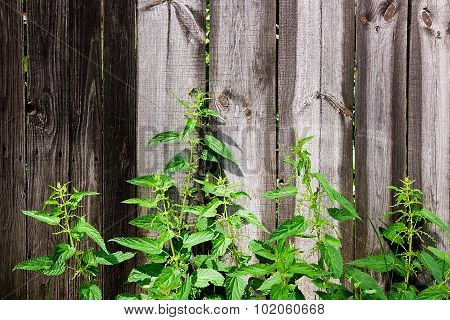 Green Leaves Of The Nettle On Natural Wooden Background.