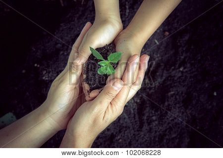 Seedling Of Plant In Child Hand