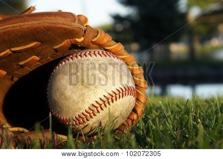 Baseball Glove Laying In Grass