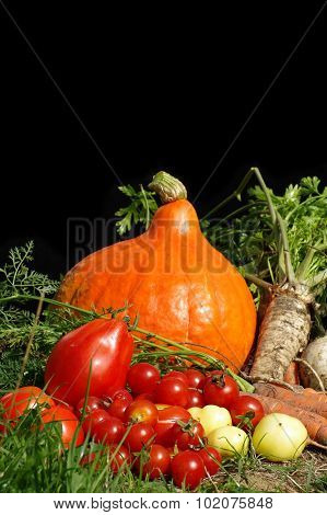 vegetables bio still life
