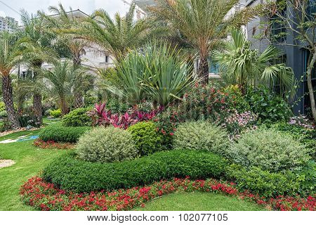 Plants at the local garden center