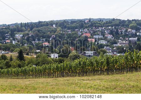 Vineyards And Houses In Vienna In The Hills