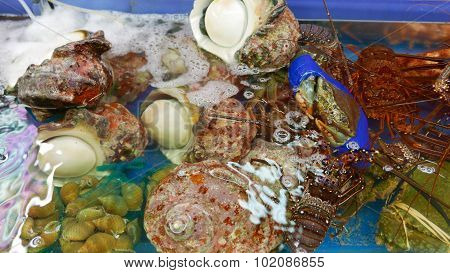 Shellfish, lobster, shell