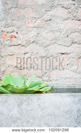 Green Plant With Brick Background