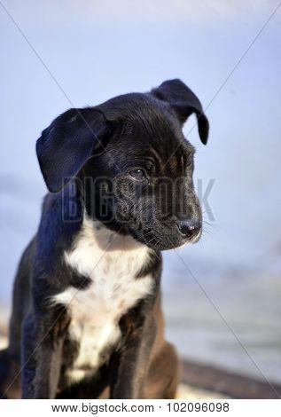 Cute Puppies Of  Dog, Animal Theme