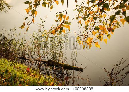 Log In Water And Branch With Bright Yellow Leaves