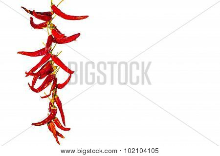 Bunch of hot chili peppers on white background