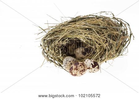 Quail Eggs In Nest Isolated On White Background