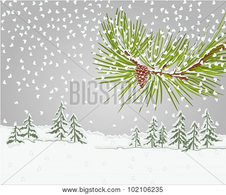Winter Pine Branch With Snow And Pine Cone Christmas Theme