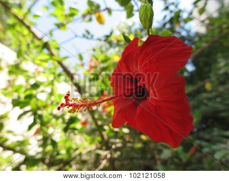 Bush With Red Flowers With A Decorative Post And Stamens