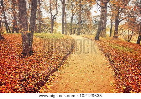 Alley In Autumn With Fallen Leaves - Autumn Landscape