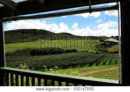 Landscape view of Waiheke Island New Zealand.