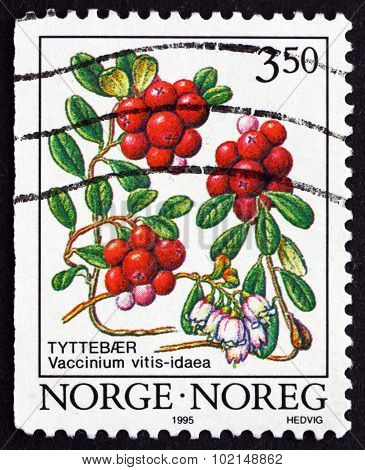 Postage Stamp Norway 1995 Cowberry