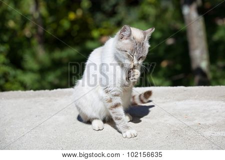 young white sleepy cat, outdoor picture
