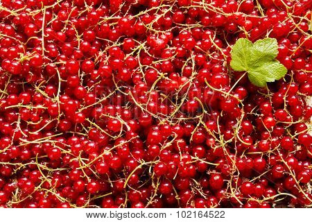 Juicy redcurrants for background