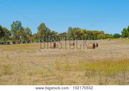 Hayricks In A Farm Landscape