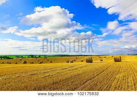 Yellow Round Straw Bales On Stubble Field