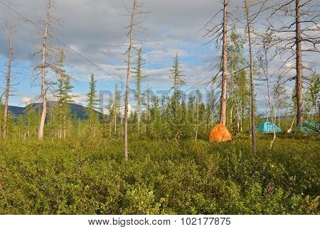 Tents In The Taiga.