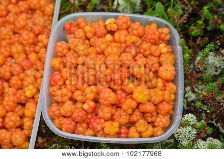 Cloudberries.