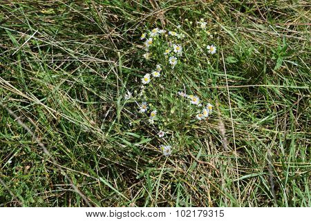 little white wild flowers