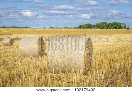 Golden hay bales on field in summer