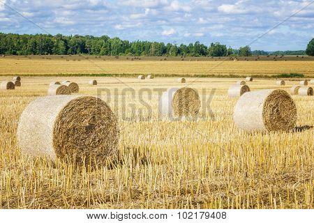 Hay bales on field in summer