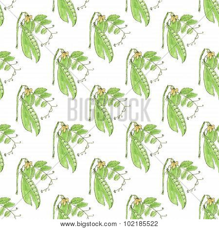 Green pea. Seamless pattern with vegetables. Hand-drawn background. Vector illustration.