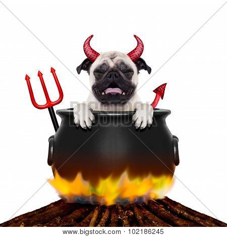 Halloween Dog And Bonfire