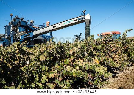 Grape Harvesting At A Winery
